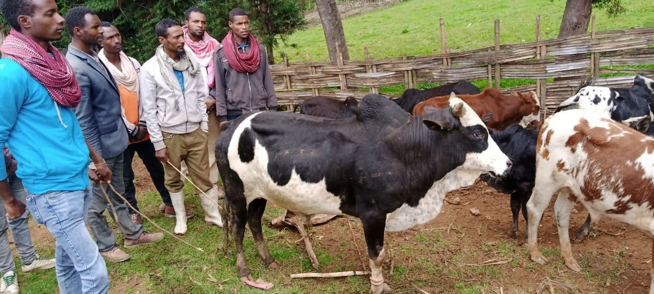 Dodola and Nansabo Youth Social and Economic Empowerment Project